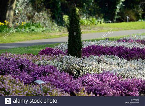 white flower garden erica carnea white flower garden plant winter