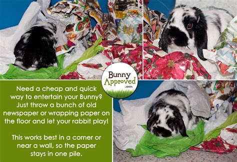 diy rabbit toy ideas bunny approved house rabbit toys snacks  accessories