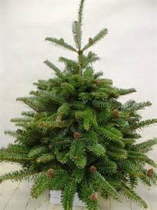 articifical vs real which christmas tree is more eco