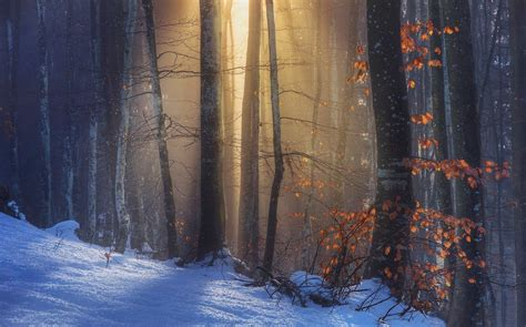 nature landscape sun rays sunlight forest fall snow