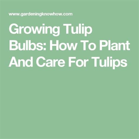 best 25 tulip care ideas on pinterest how to grow tulips planting tulip bulbs and planting