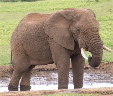 le elefant animale și păsări resurse multimedia terapie in autism