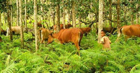 agroforestry  keanekaragaman hayati forester untad blog