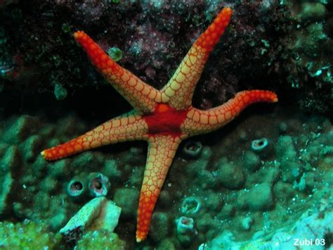 Starfish Squishy Glow In The Squishy By Vlo animals that live in the twilight zone twilight zone