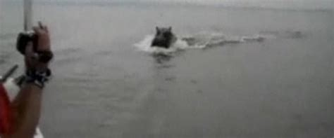 hippo chasing motorboat evan petkau luke willms chased by hippos in kenya video