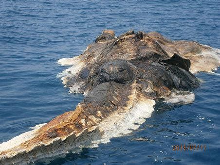 mysterious sea creature found by iranian navy – real truth