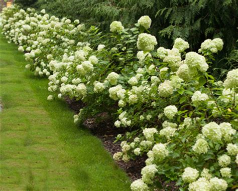popular landscaping plants 10 great shrubs to use in your landscape proven winners