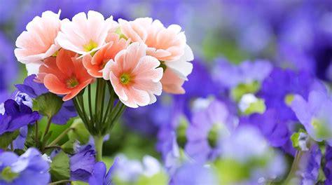 flower wallpaper    mobile flower