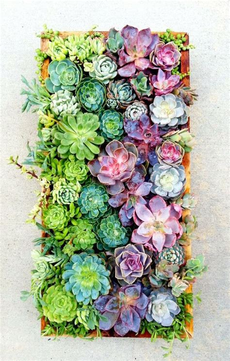 succulent terrariums and vertical hangings artcream