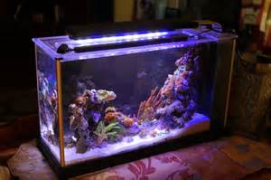 fluval spec 5 gallon converted to pico reef tankImg5697Jpg Pictures