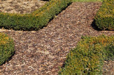 Warum So Viele Pilze Im Garten by Pilze Auf Rindenmulch 187 Warum Wachsen Sie Da