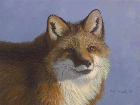 the man red fox wise old man red fox pat pauley wildlife art