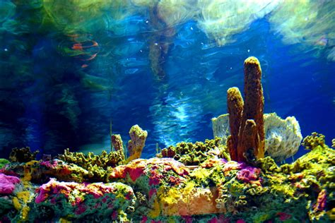 coral reef by jengineerr on deviantart coral reef by mlstock on deviantart
