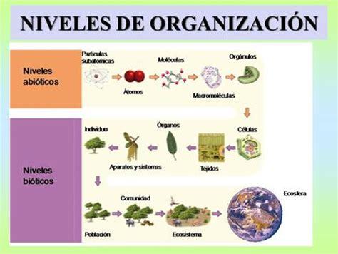 bases legales y de organizaci n estructural de la seres vivos y materia viva ppt video online descargar