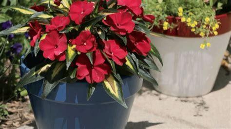pots service painters dubai 0553921289 al suroor technical services llc