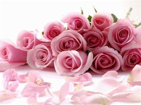 fiore rosa significato rosa significato significato fiori significato