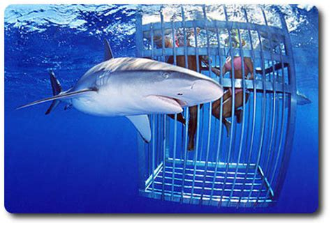 cage dive with sharks facts about sharks if you want to swim with them shark sider