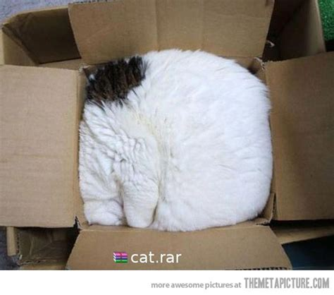 why cats are liquids the meta picture cat rar the meta picture