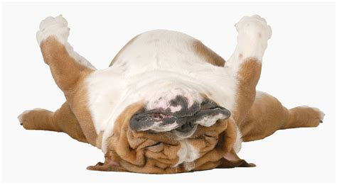 relaxers for dogs pet business insurance the uk s 1 for walking more