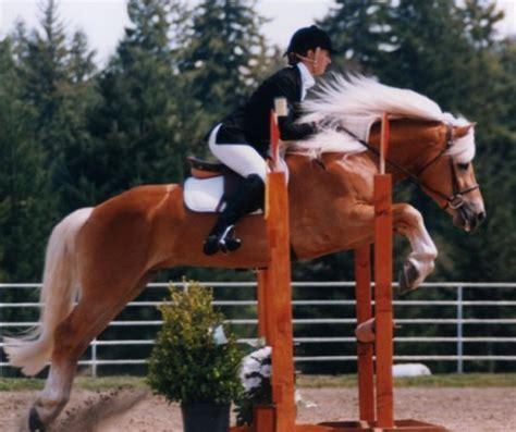 www.kone lide.estranky.cz fotoalbum chody koně kůň