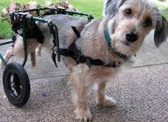 special needs dogs for adoption be special adopt a with special needs animal guardian
