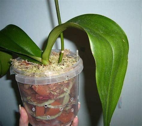 menanam hidroponik  contohnya bibitbungacom