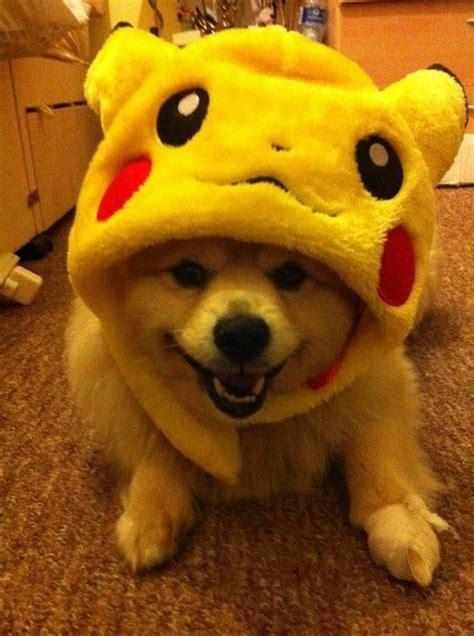 pikachu puppy the world s catalog of ideas