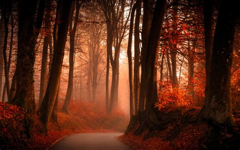 wallpaper forest autumn pathway hd  nature