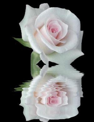 imagenes d erosas blancas gif de rosas blancas todo en im 225 genes gif pinterest