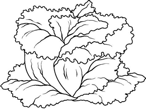 Vegetables Coloring Pages Crafts And Worksheets For Lettuce Coloring Page