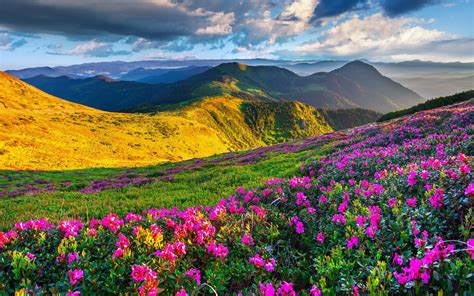 photo collection download nature beautiful scenery