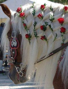1000+ images about braiding the horse on pinterest