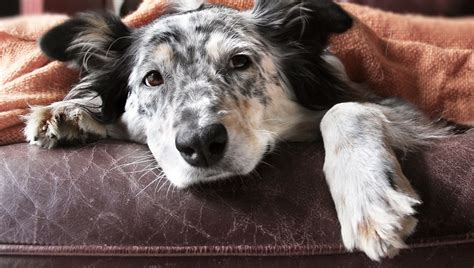ciprofloxacin for dogs ciprofloxacin for dogs uses dosage and side effects dogtime