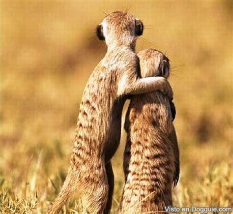 imagenes animales abrazados 34 fotos curiosas raras y graciosas de animales dogguie