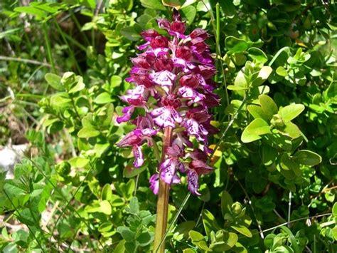 Photo Orchidée Sauvage by Orchid 233 E Sauvage Par Claude Sbodio Sur L Internaute