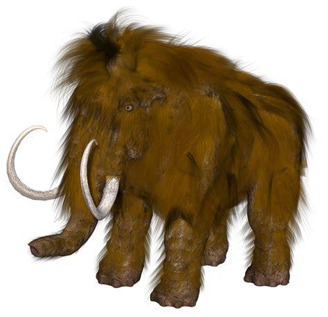 mammoth images animal mammoth hair 183 free image on pixabay
