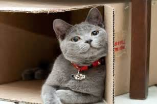 moving cat to new home tips on moving house interstate with your pet step by step