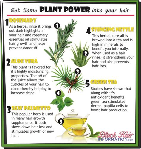 healthy hair tips get some plant power into your hair
