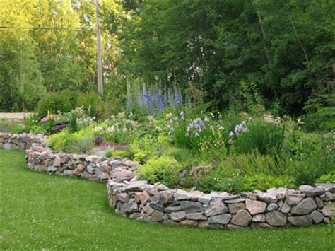 Raised Rock Garden Northern Exposure Gardening The Wave Of Delphiniums Has Started