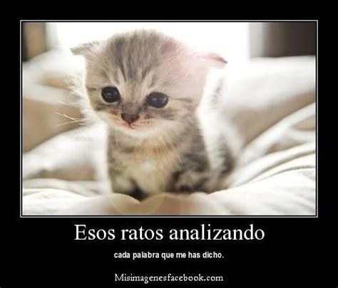 imagenes locas tiernas gatos lindos con frases gatos pinterest gatos and frases