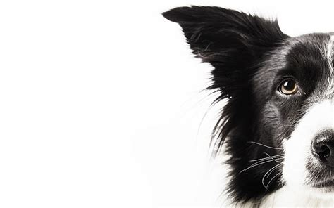 puppy eye discharge crusty dogs health problems