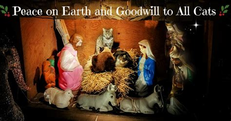 peace on earth will to dogs books peace on earth and goodwill to all cats cat writers