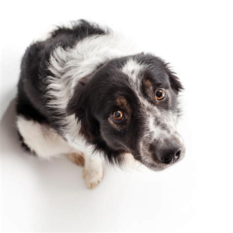 anxiety dogs calming your s anxiety during noisy fourth of july sciencedaily