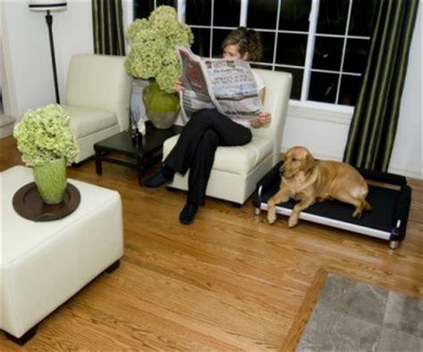 living room beds dutch dog design llc introduces an innovative product line
