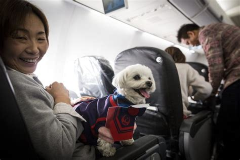 airlines that allow dogs this airline allowed passengers to fly with their dogs