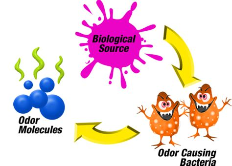 Decoding Odours One Molecule At A Time by Olfactics And Olfactory Diagnostics Odor