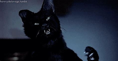 the 20 awesomest gifs of cats being dicks | heavy.com