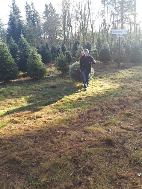 pilchuck secret valley christmas tree farm christmas