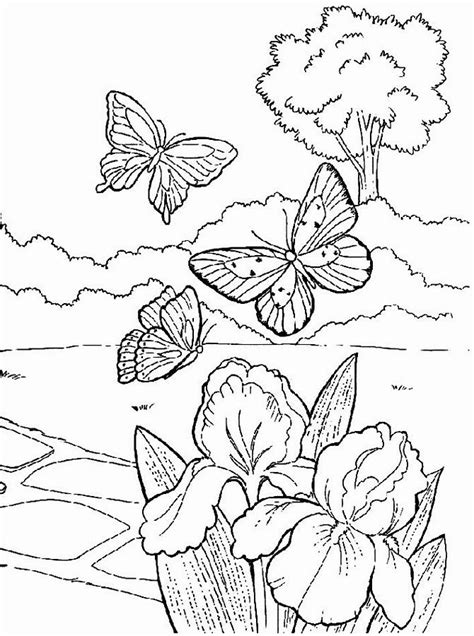 coloring pages summer flowers 142 best images to color floral butterflies images on