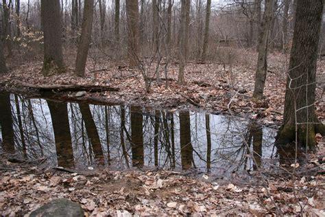 Backyard Vernal Pool Nature By The Yard 187 Hibians